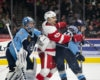 AHL Central News: Griffins & Rampage Riding High