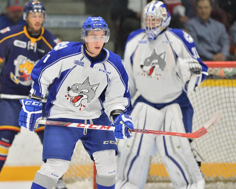 David Levin, OHL, Sudbury Wolves